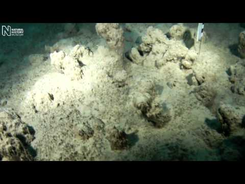 Extreme survival of cyanobacteria | Natural History Museum