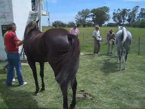 Fotos de caballos de carrera 78