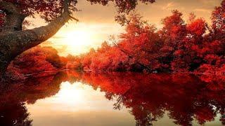 Beautiful Relaxing Music Romantic Music Piano Music Violin Music Cello Music 115