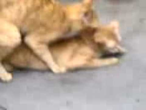 Cat sex scandal.3gp