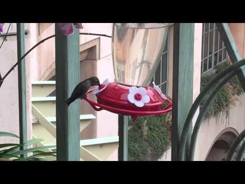 I love feeding my hummingbirds on my office terrace.