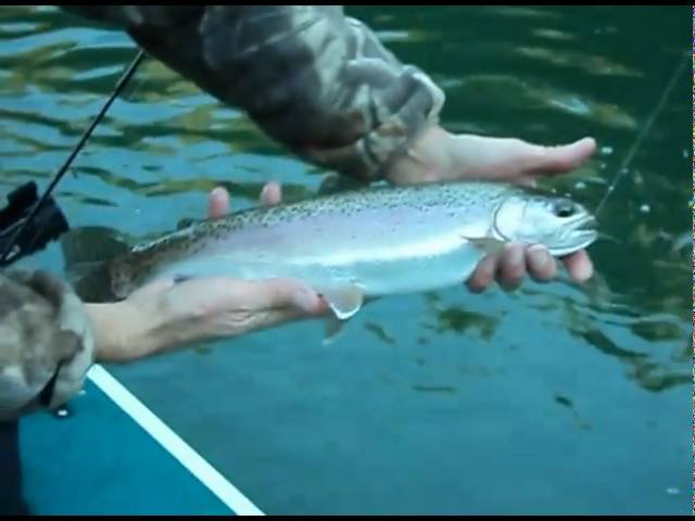 Bullards Bar Winter Rainbow Trout