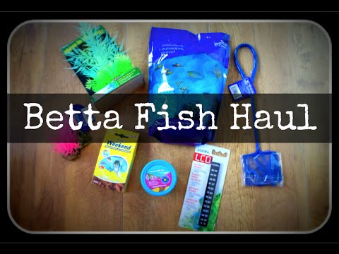 Betta Fish Haul