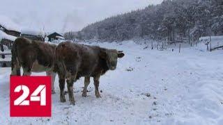 В Якутии уголь начали развозить по отдаленным котельным - Россия 24