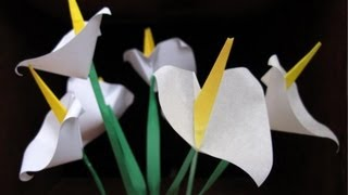 Origami Calla Lily :: Flor Alcatraz - Cartucho