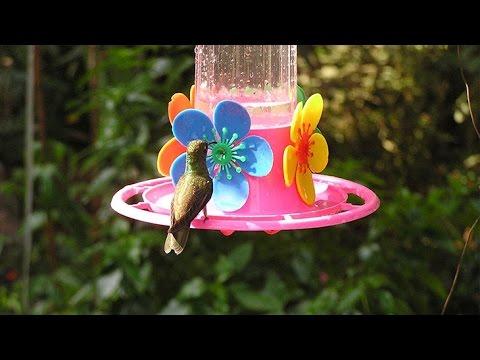 Haz tu mism@ un bebedero para colibríes