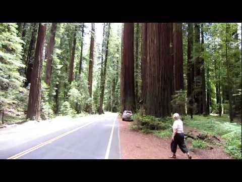 Avenue of the Giants, Humboldt Redwood state park