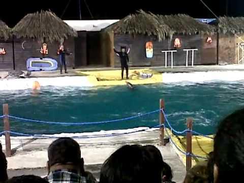 2013  Delfines en Ciudad Victoria, Tamaulipas