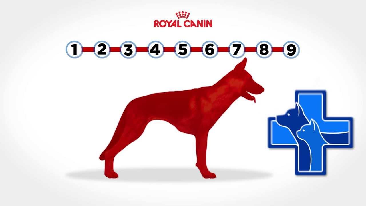 Dog Body Condition Score Body Condition Score Your Dog