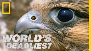 Fastest Animal Makes a Kill | World