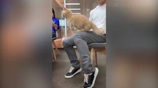 😻 Cats and Dogs   Awesome Funny Animals 2019 🐶