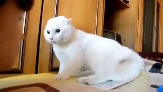 Funny Cat  Animals Video