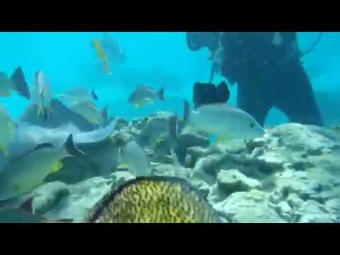 Underwater Walk - Moorea, French Polynesia - March 2014 - Video 1