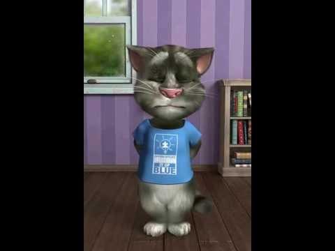 Gatto Tom In Calore