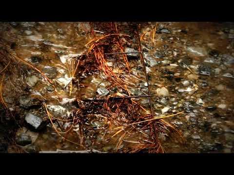 Pinal de Amoles, Qro. La mágica neblina