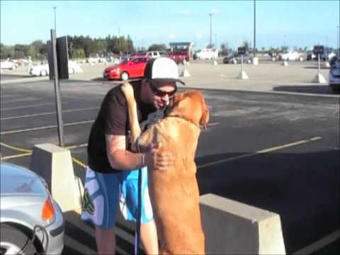 Soldier reunites with dog at airport