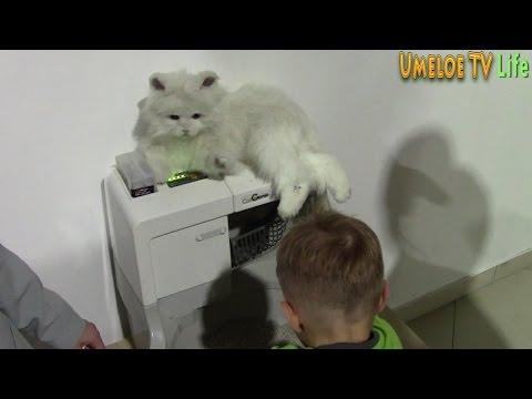 Я в ШОКЕ! Появился Робот Туалет для животных