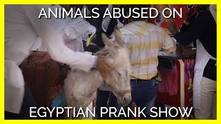 This Egyptian Show Abuses Animals for Cruel Pranks
