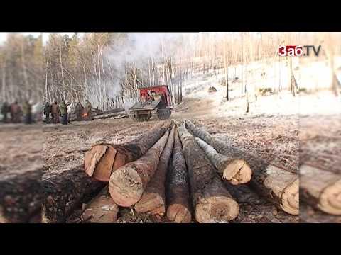 Еще 2 млн гектаров забайкальского леса отдадут китайцам