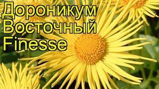 Дороникум восточный Файнес. Краткий обзор, описание характеристик doronicum orientale Finesse