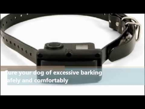Pet Products Online | SportDOG Rechargeable 10R Bark Control Collar ...