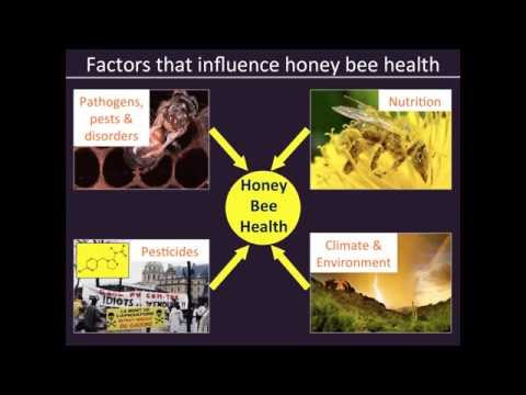 2015 02 11 10 01 Honeybees and neonicotinoids I