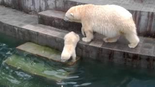Шилка купается. Новосибирск. Зоопарк.