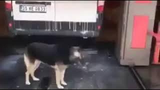 Smart Clean dog. Dog clean himself on car washing.
