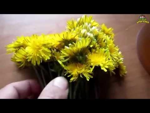 Семья Бровченко. Рецепт варенья из одуванчиков и меда без термообработки
