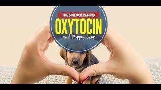 Dog Oxytocin Myth: Dogs Do Not Love You