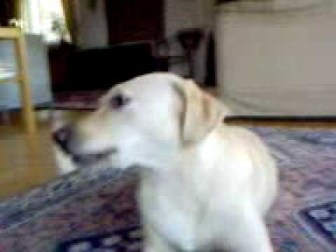 That's One Fucked-up-dog!!!!! video