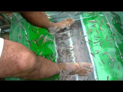 Fish massage in Cambodia