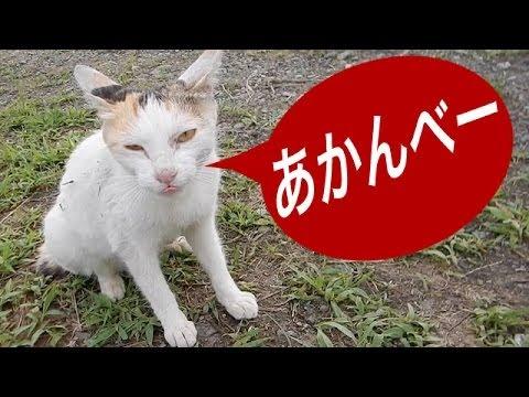 フィッシングでナッシィング 猫パンチ炸裂 River-fishing with a cat