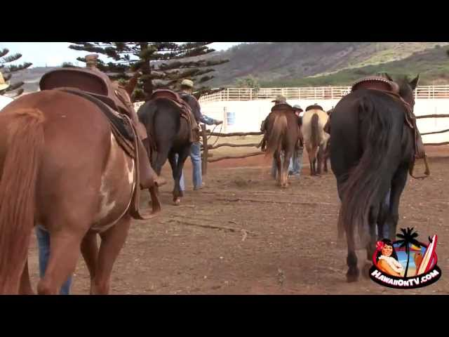 Lana'i Western Adventures - Equestrian training at The Stables at Koele
