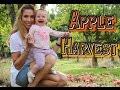 APPLE HARVEST PARTY   Как мы собирали яблоки и сами делали ЯБЛОЧНЫЙ СОК