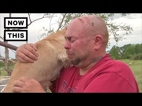 A Family Reunites With Their Dog After A Horrific Tornado | NowThis