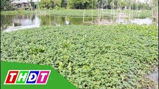 Hiệu quả kinh tế từ cây thủy sinh mùa nước | THDT