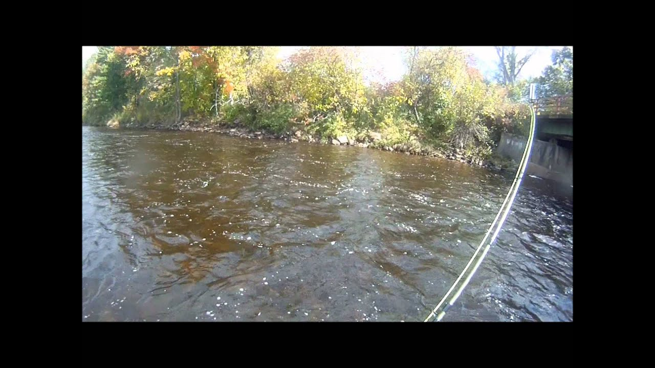 Fall excursion to the salmon river in malone youtube for Salmon river ny fishing regulations