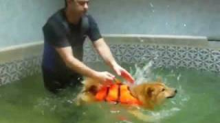 Бассейн для собак | Pool for dogs