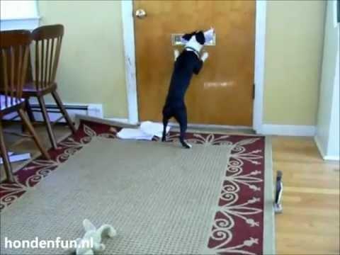 Honden Bloopers (nieuw 2011!!)