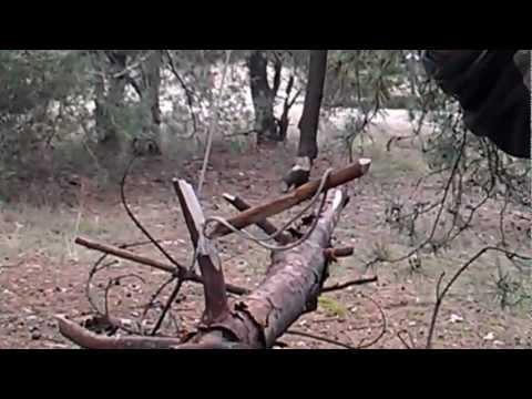 Как сделать капкан для фазана видео
