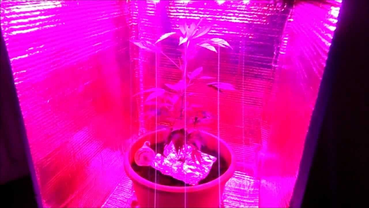 how to grow weed with led 3 watt high powered led grow. Black Bedroom Furniture Sets. Home Design Ideas