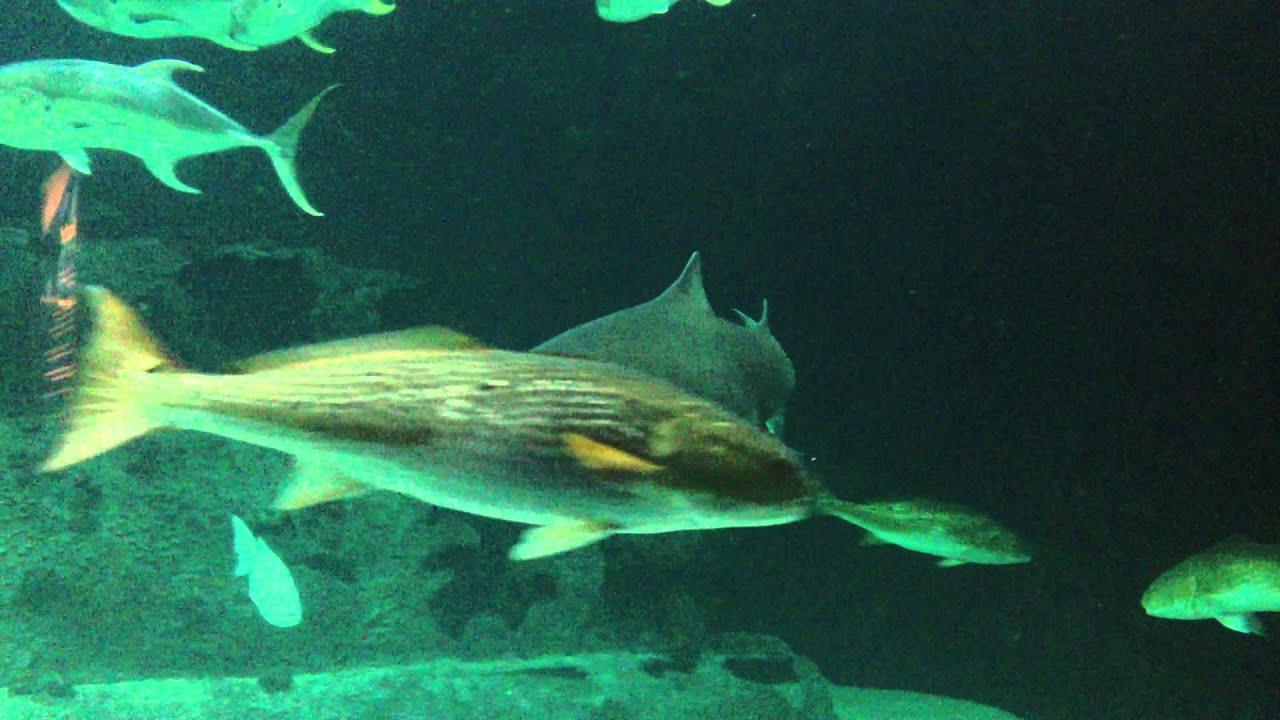 Nc Aquarium At Pine Knoll Shores U352 Living Shipwreck