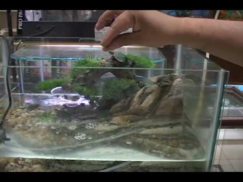 Reportaje cuidados de las youtube for Peceras para tortugas