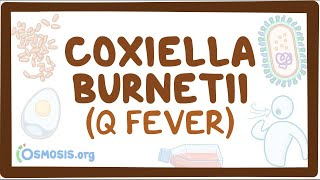 Coxiella burnetii (Q fever) - causes, symptoms, diagnosis, treatment, pathology