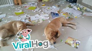 Somebody's in Trouble || ViralHog