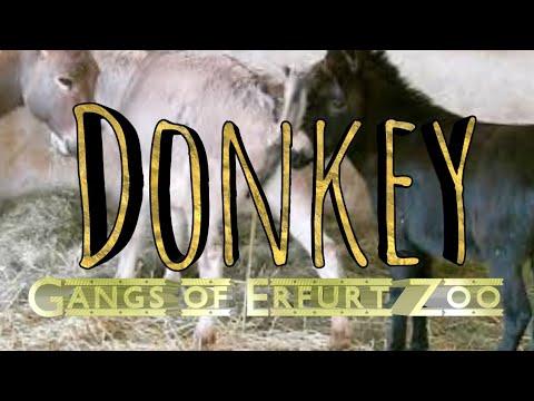 """Esel """"Gangs of Erfurter Zoo"""""""