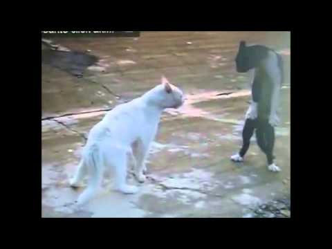 Gut Horse Sex 2014matingcat Fight Gato Lucha 猫扑 Katzenkampf Katzen Kämpfe 貓撲 кошка борьбе  Rezension video