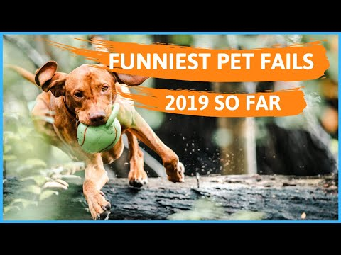 Funniest Pet Fails Compilation - 2019 So Far