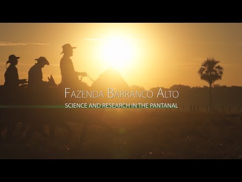 Fazenda Barranco Alto - Science and Research in the Pantanal